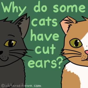 耳の切られた野良猫、オス1匹とメス1匹
